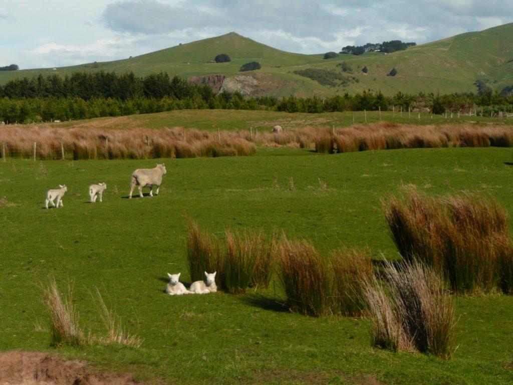 Nenaaranžovaná novozélandská idyla