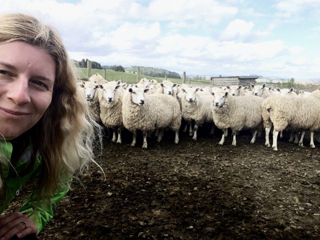 Na ovčí farmě