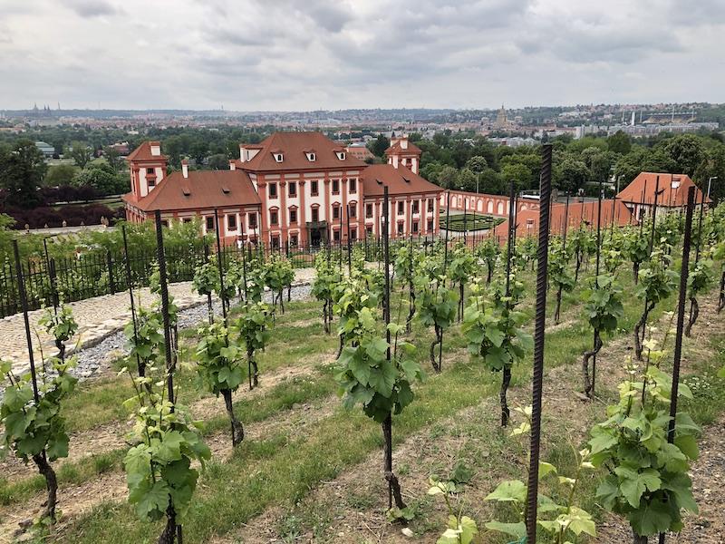 Výhled z vinic sv. Kláry