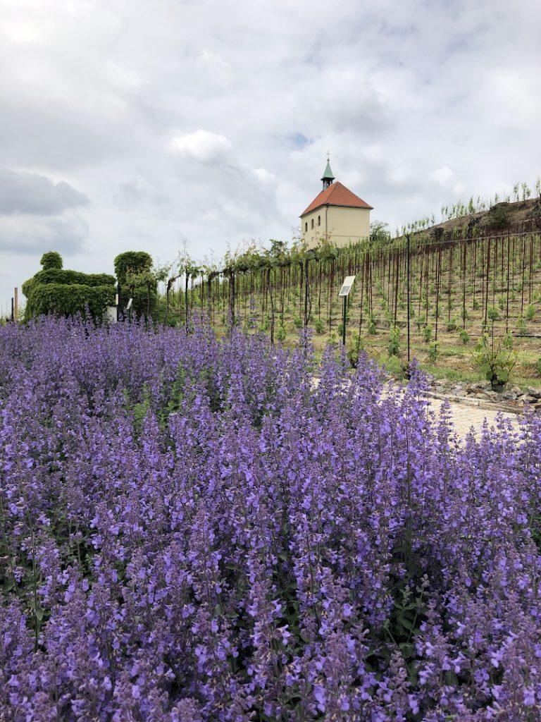 Botanická v Praze