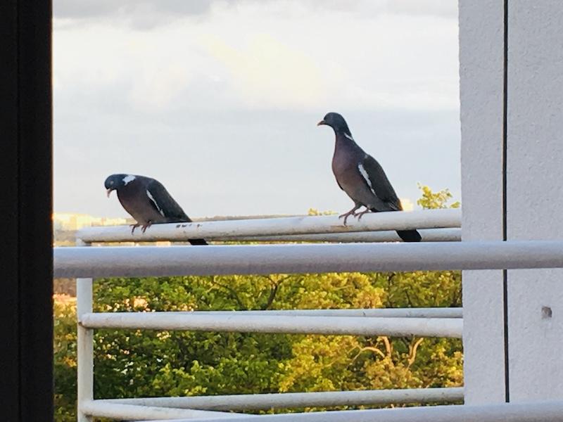 Appku můžete použít i na ptactvo u vás doma/na parapetu/terase