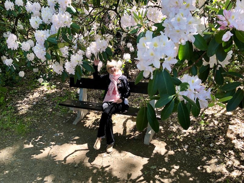 Rododendrony všude